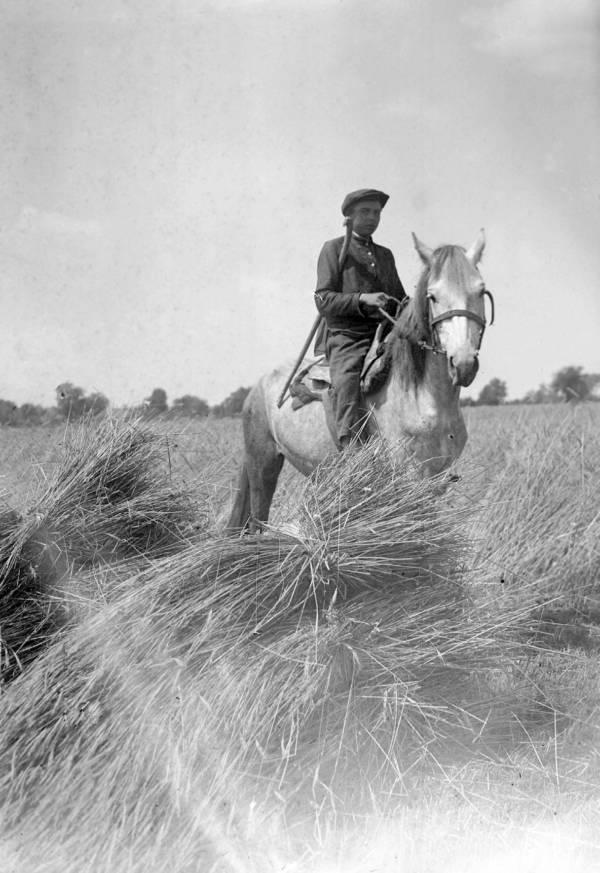 Soldier In Wheat Fields