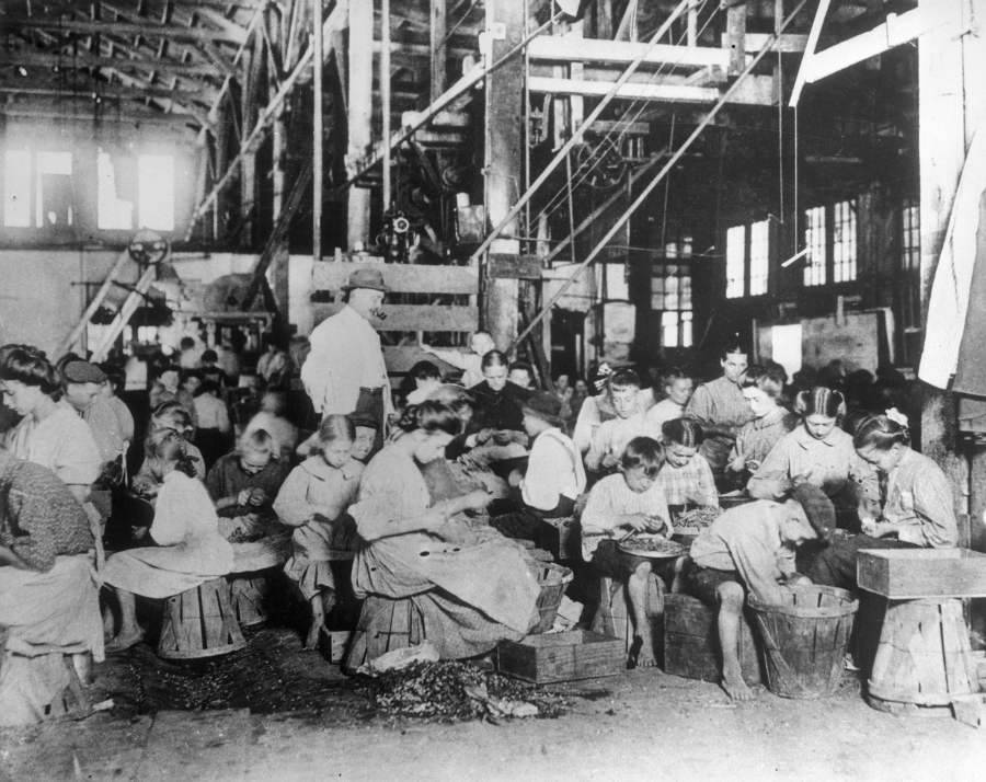 String Beans Being Processed By Hand