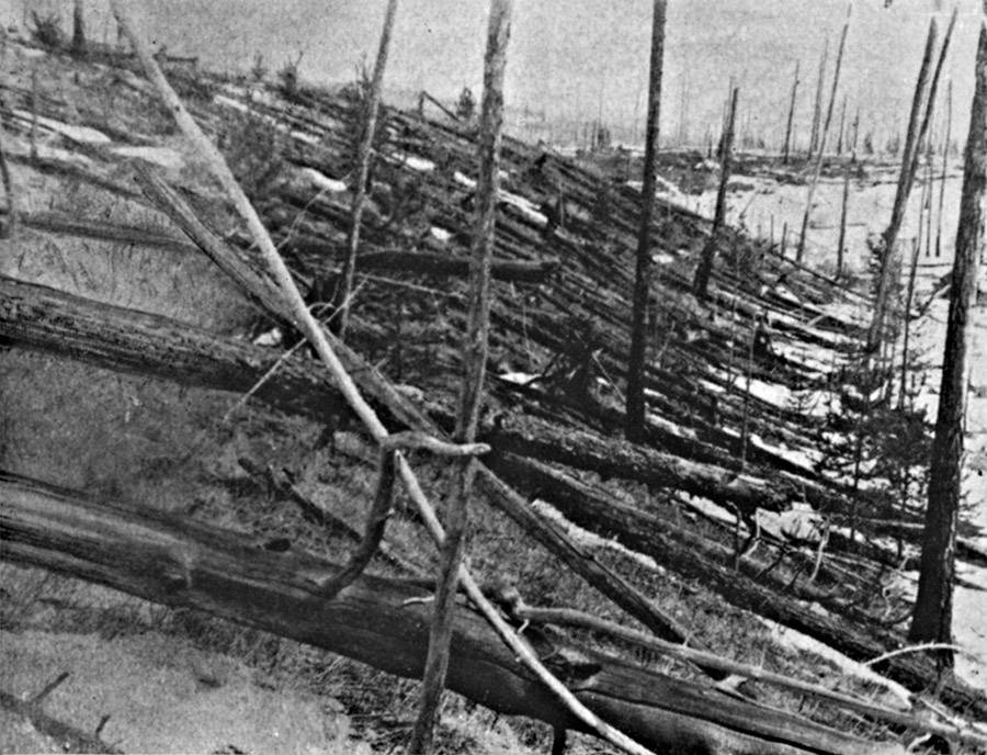 Toppled Tunguska Trees