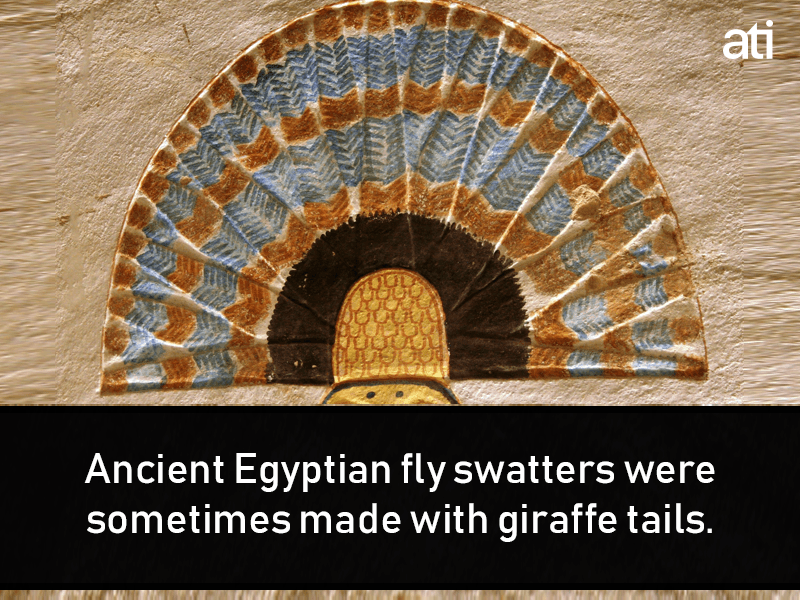 Weird Ancient Egypt Facts