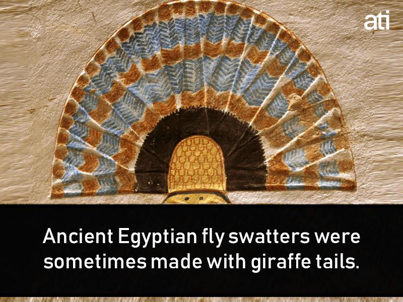 Weird Ancient Egypt Facts