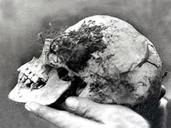 Wych Elm Bella's Skull