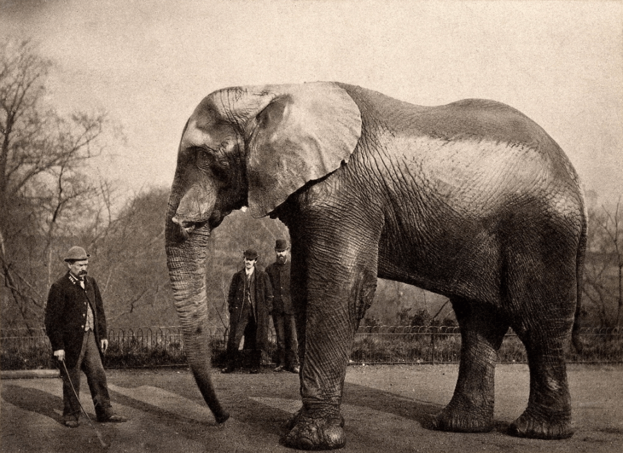 Jumbo The Elephant And Trainer Matthew Scott