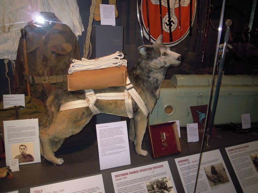 Bing Airborne Dog