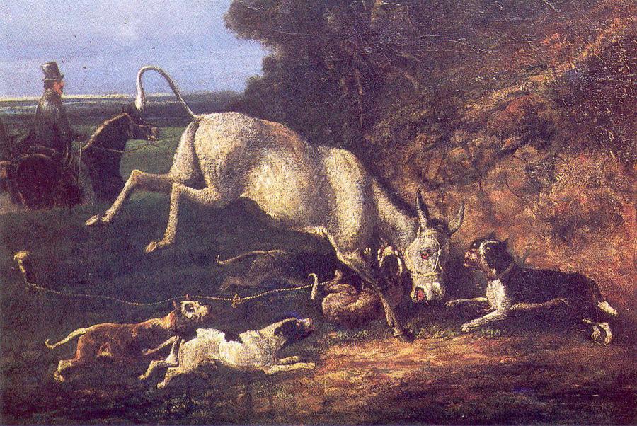 Donkey Baiting