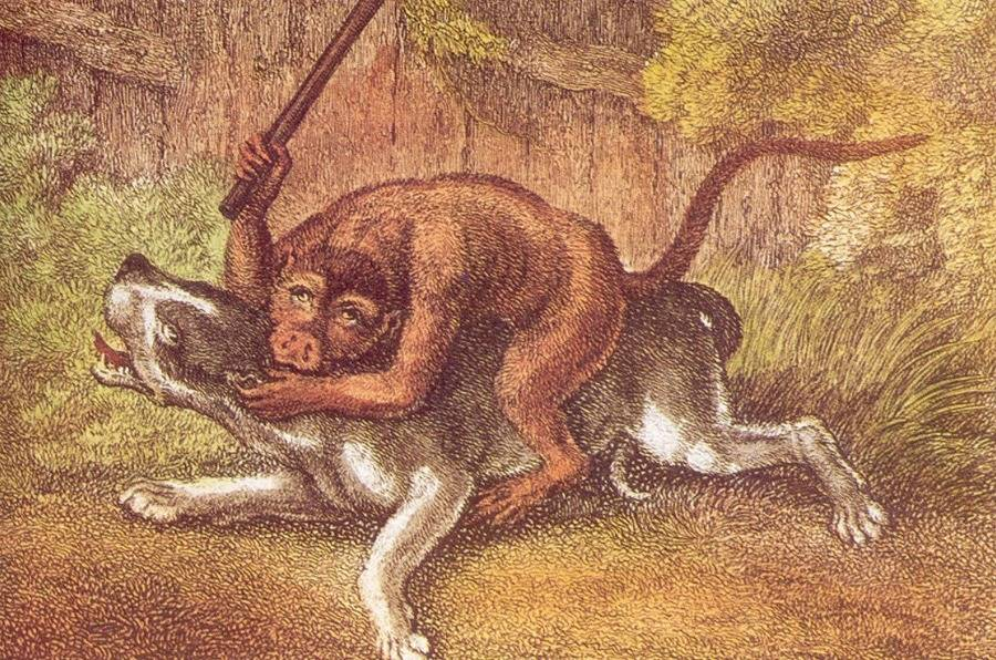 Monkey Baiting