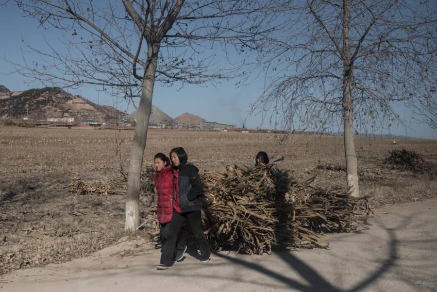 North Korea Sticks