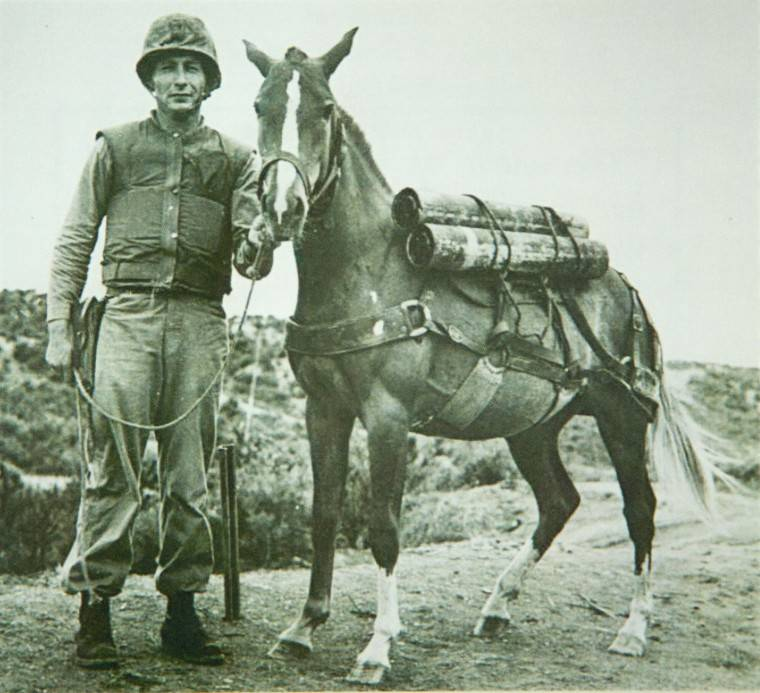 Sgt Reckless Dickin Medal