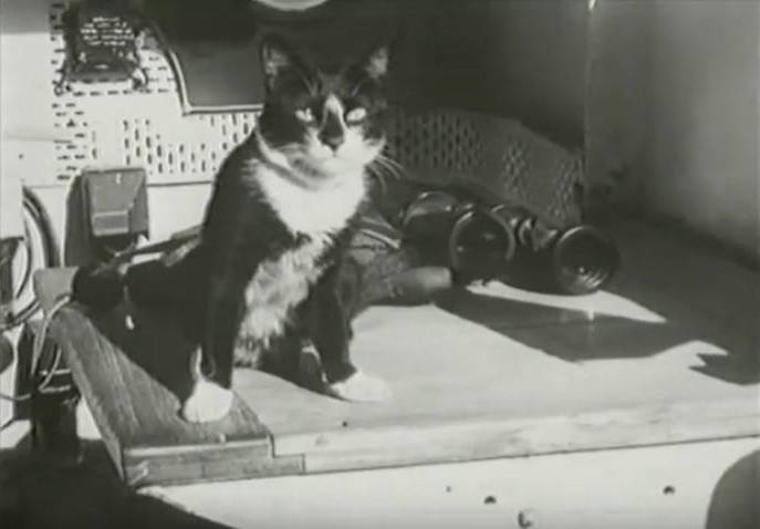 Simon The Cat Binoculars