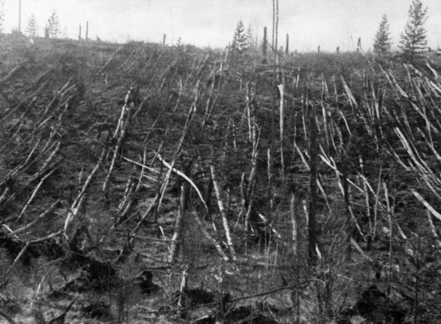 Flattened trees from the Tunguska Event