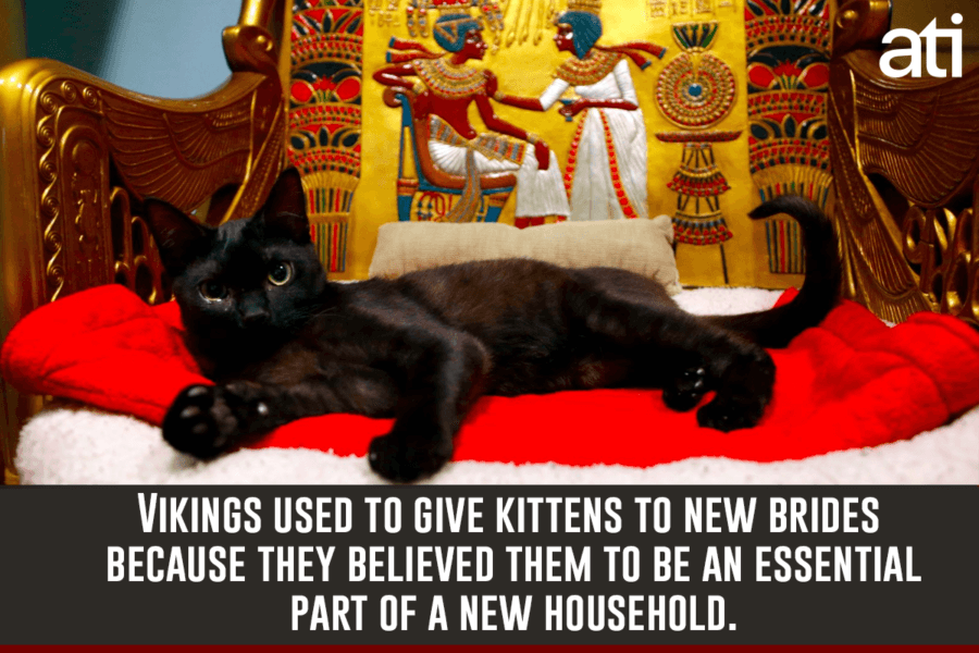 Viking Facts Cats For Newlyweds