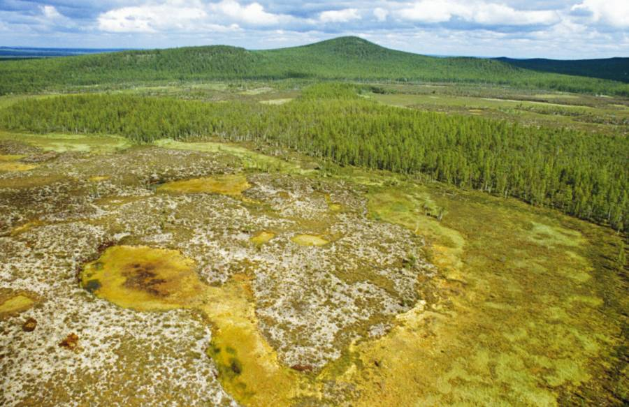 Young Tunguska Forest