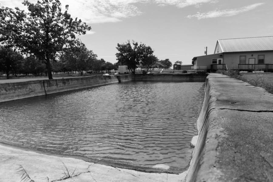 Branch Davidian Pool