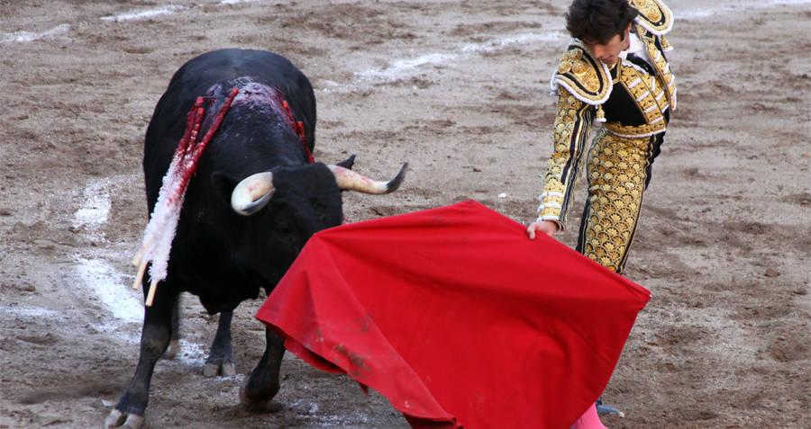 Bullfighter Waving Cape