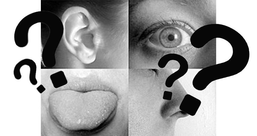 Five Senses Interesting Random Facts