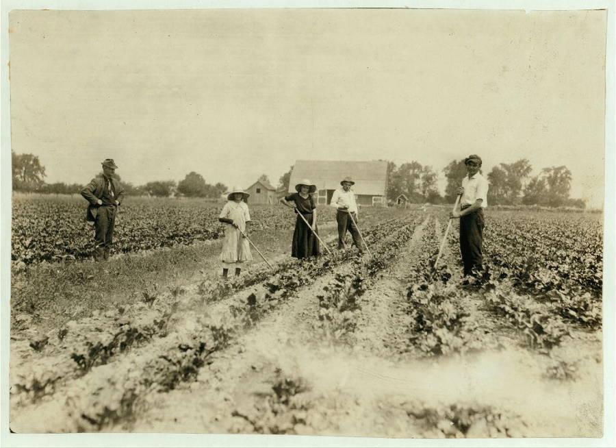 Hungarian Beet Farmers