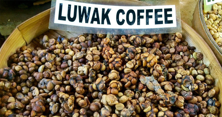 Kopi luwak Coffee Seeds