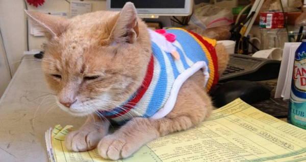 Mayor Stubbs The Cat: Meet The Alaskan Mayor Who Served 20 Years