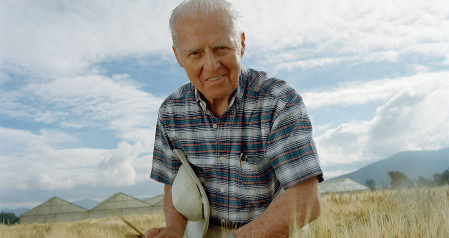 Norman Borlaug in wheat fields