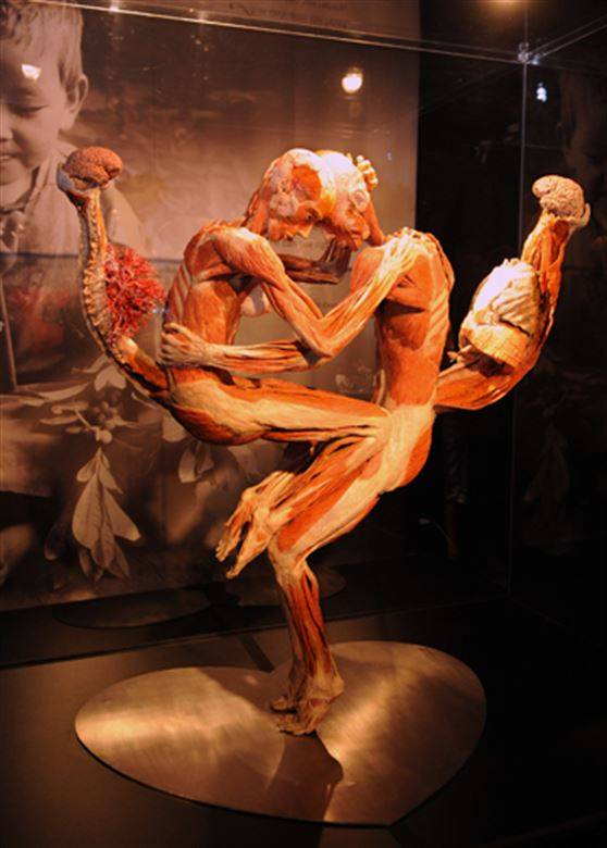 Plastination Couple
