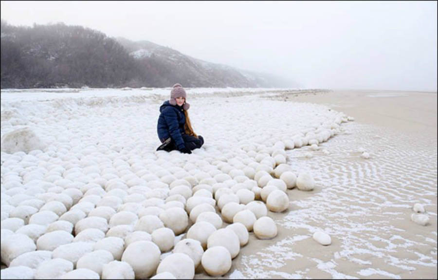 Siberian Snowballs On The Beach