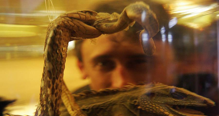 Snake Wine Man