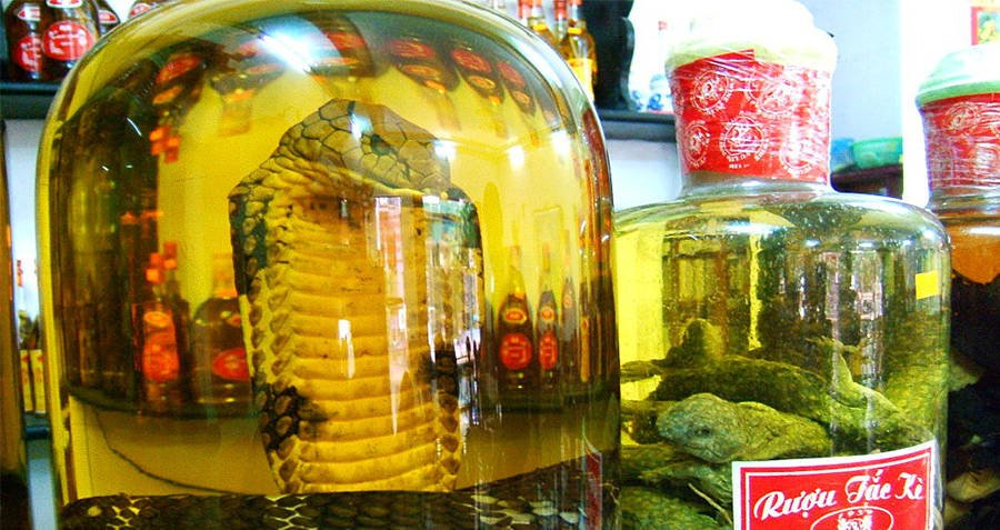 Snake Wine With A Cobra