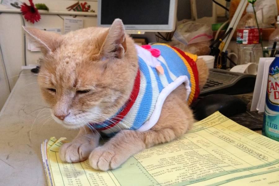 Mayor Stubbs The Cat