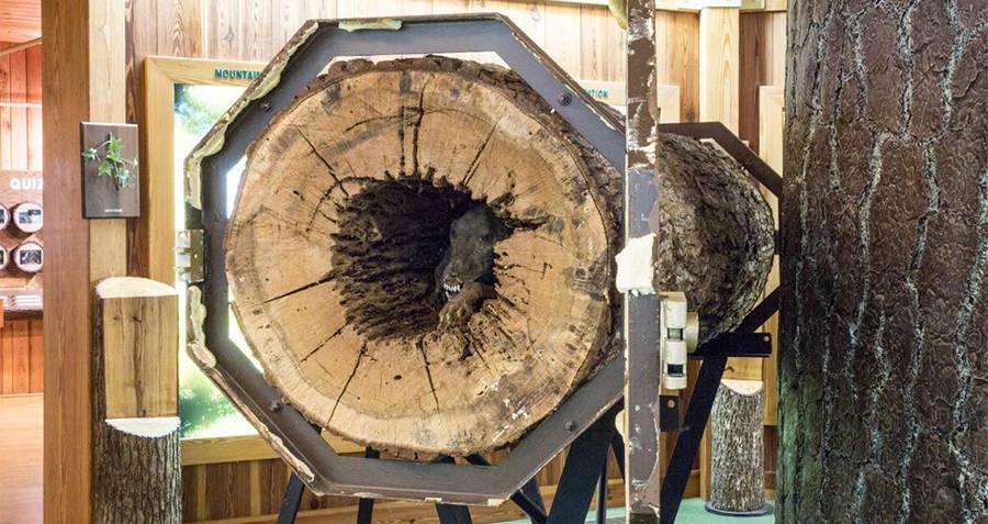 Stuckie Tree