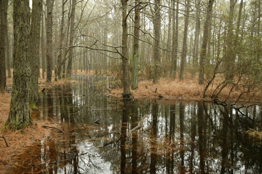 killer southern swamp rock