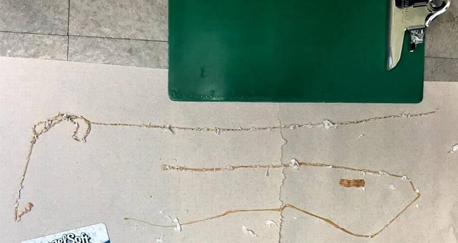 Tapeworm On Floor