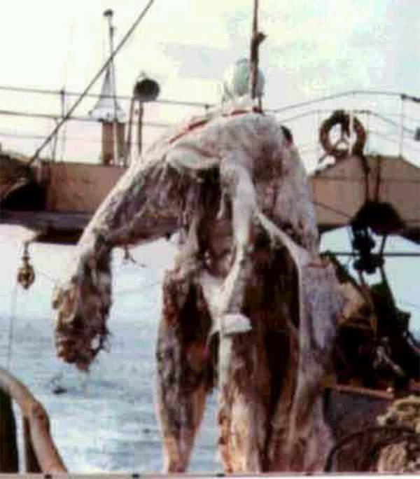 Zuiyo Maru Carcass