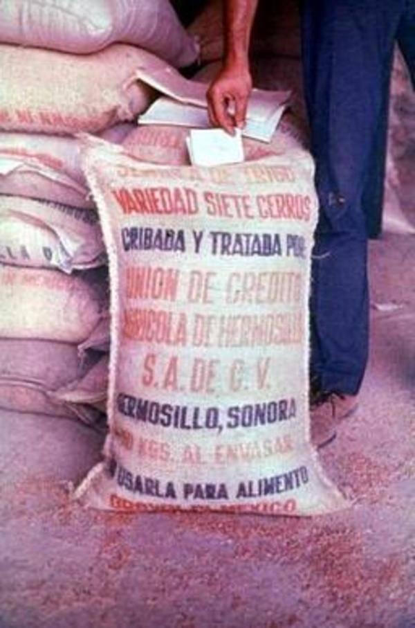 Basra Mass Poisoning Grain