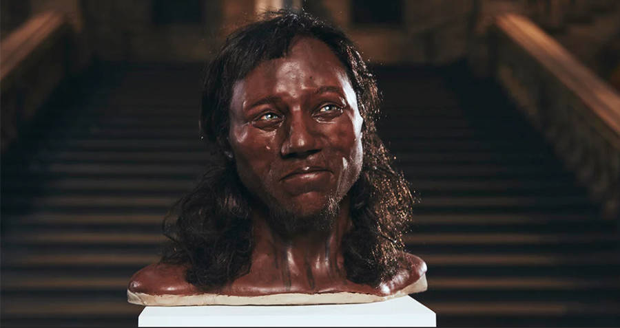 Bust Of Cheddar Man