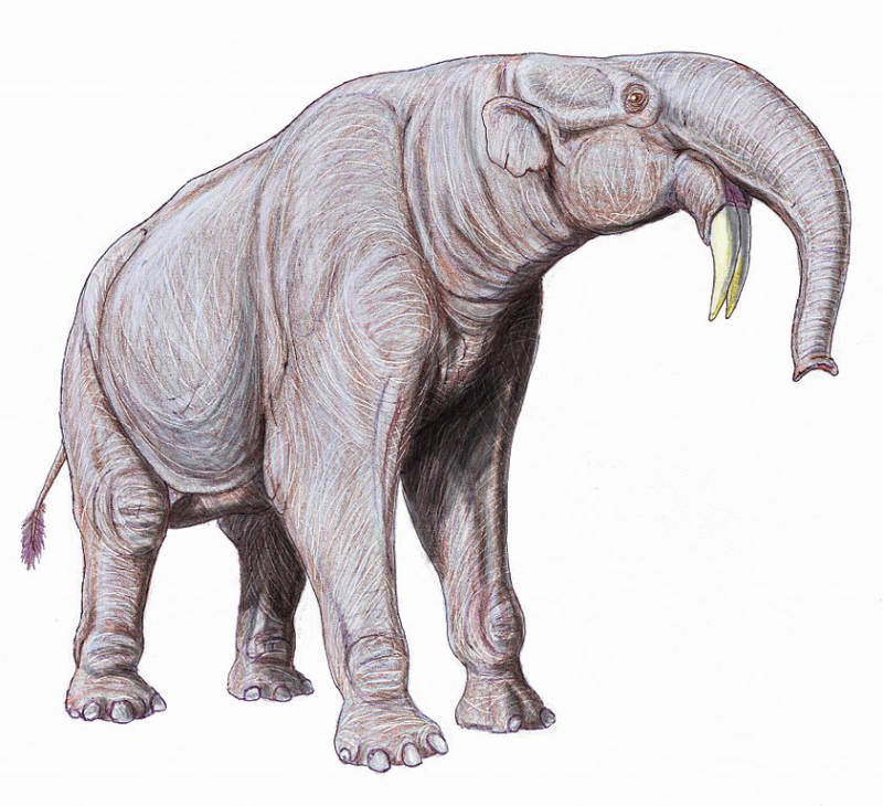 Deinotherium Extinct Animals