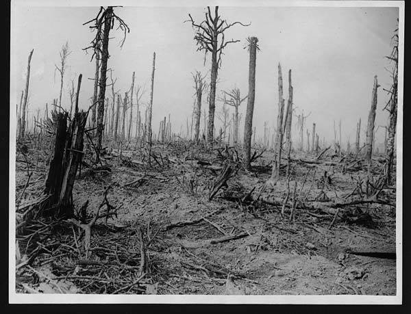 Delville Wood Western Front