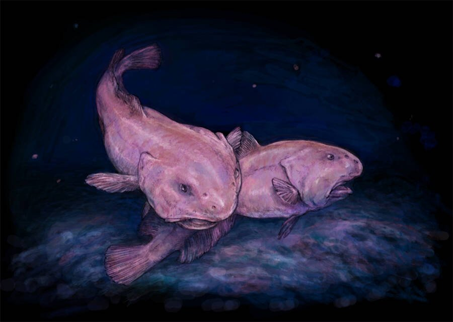 Drawing Of Two Blobfish