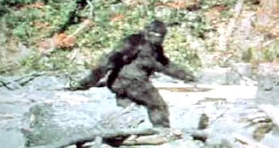 Famous Bigfoot