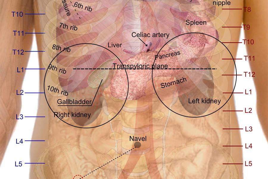 Kidney Position