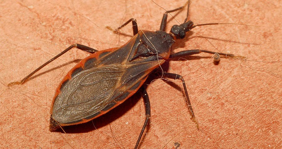 4 Gross House Bugs That Might Be Under Your Bed Right Now