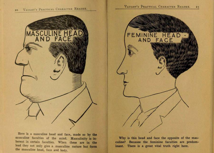 Phrenology Charts Masculine Vs. Feminine