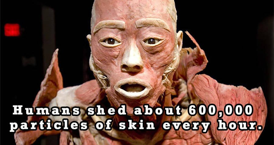 40 Amazing And Weird Human Body Facts