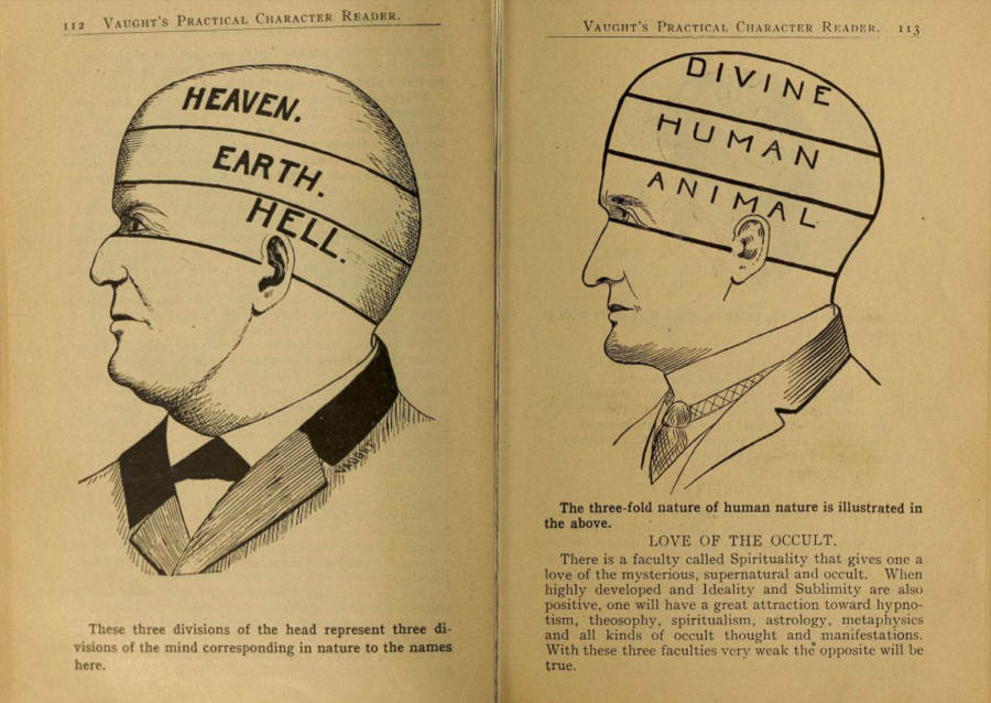 Old Phrenology Drawing