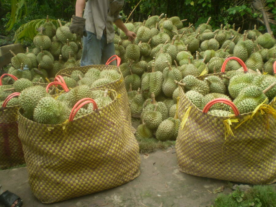 Bags Of Spiked Fruit