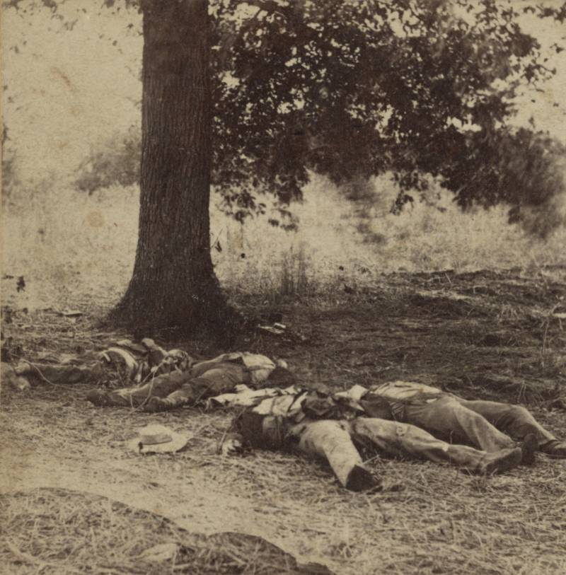 Bodies Near Tree