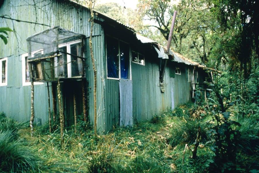 Dian Fossey Cabin