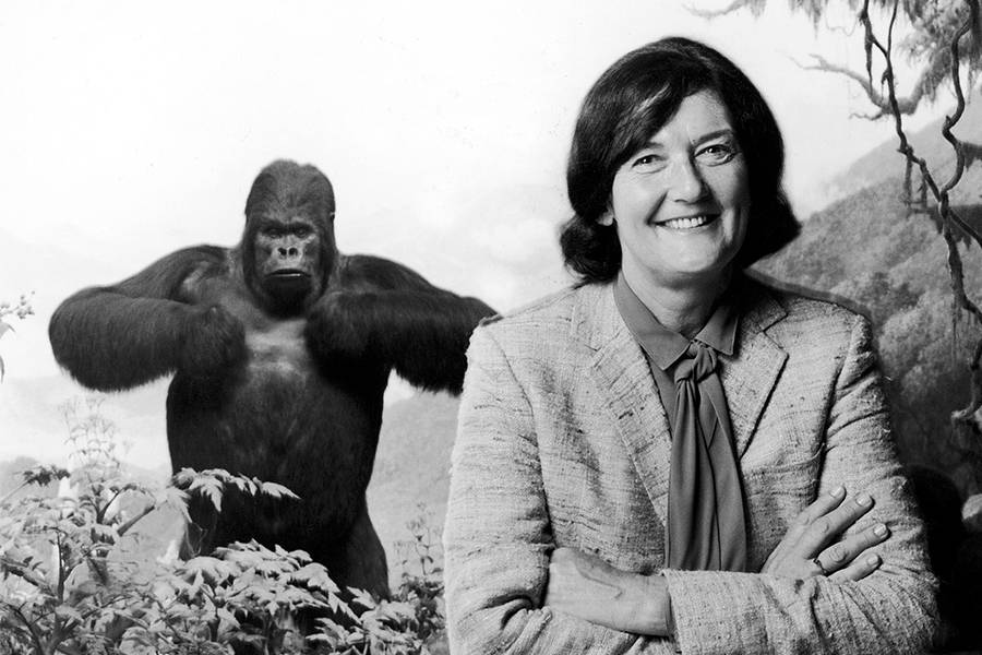 Dian Fossey Gorilla