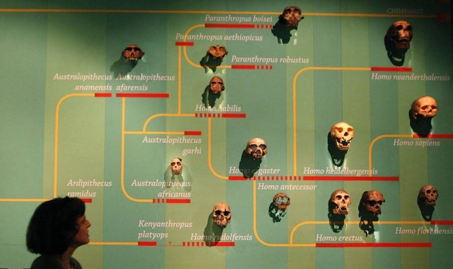 Human Evolution Exhibit