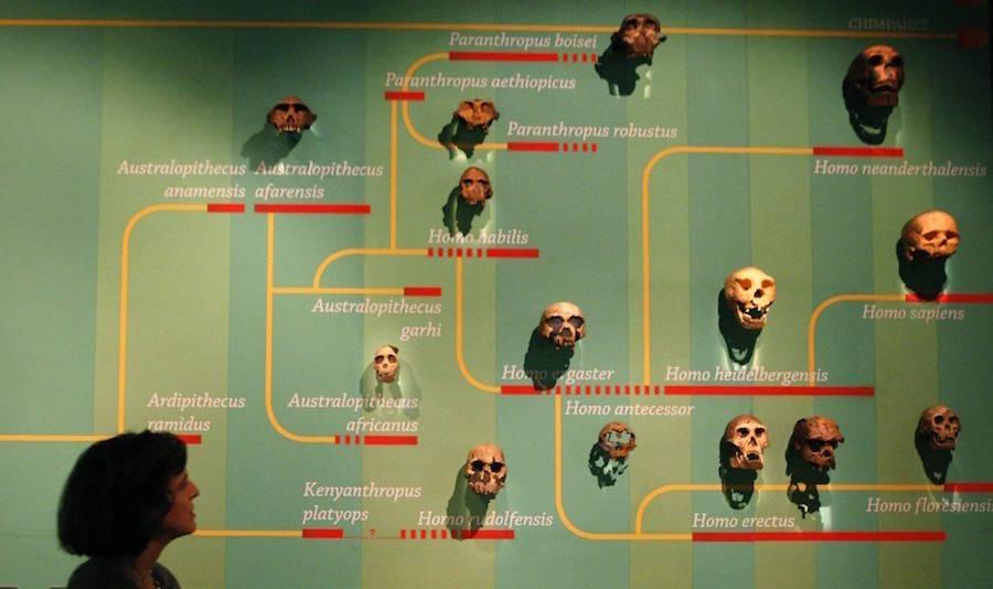 Human Evolution Exhibit