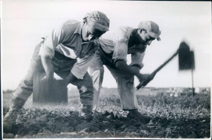 Tilling Fields